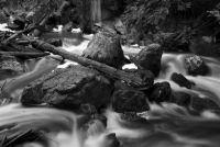 Mill Creek #2 - BW