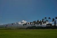 Palms in front of Haleakala