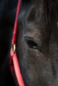 Jackson the Horse