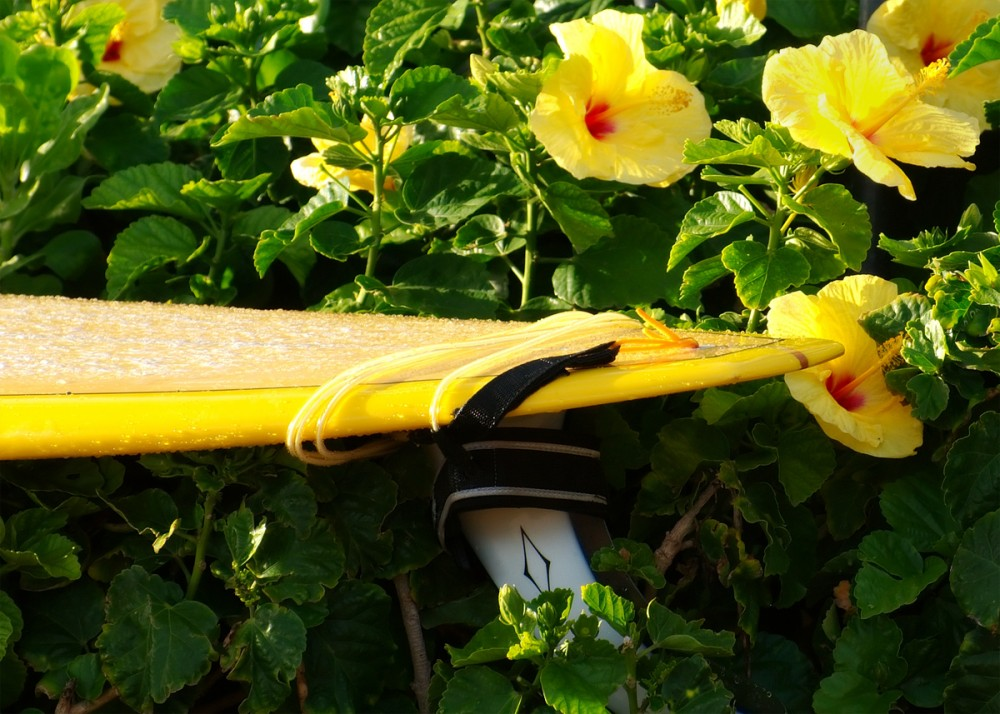Surfboard and Hibiscus