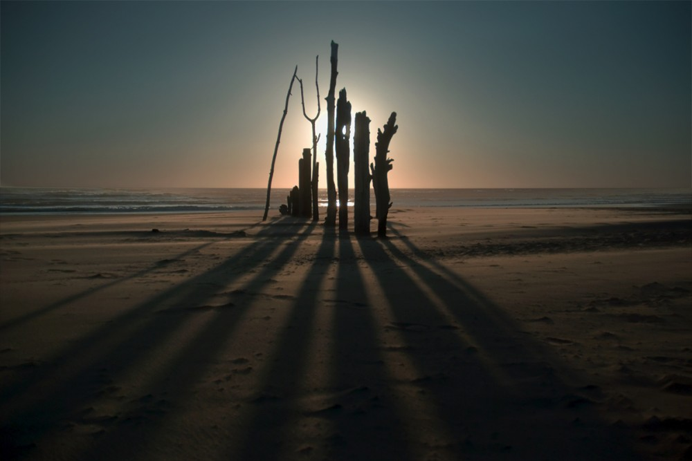 Driftwood Shadows